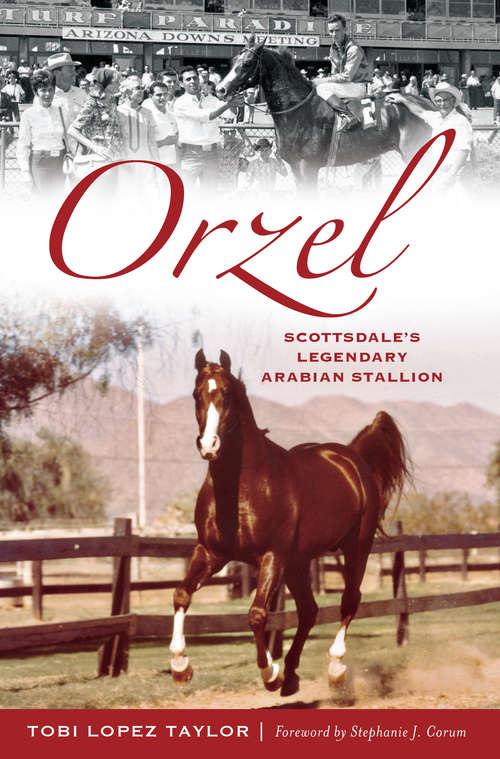 Orzel: Scottsdale's Legendary Arabian Stallion (Sports)