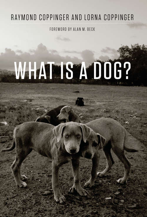 What Is a Dog?: Observations From The Wild